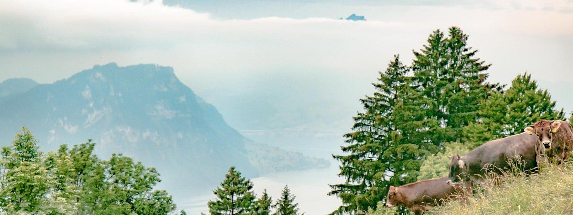 Organic farm in Swiss Alps