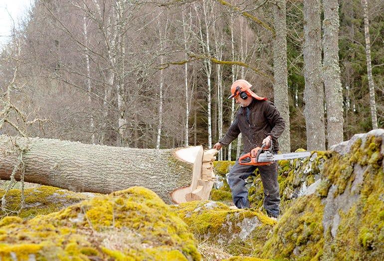Harvesting tree