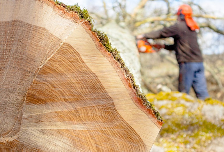 A log for custom wooden floors crafting